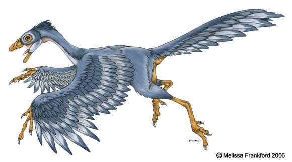 Archaeopteryx drawn by Melissa Frankford