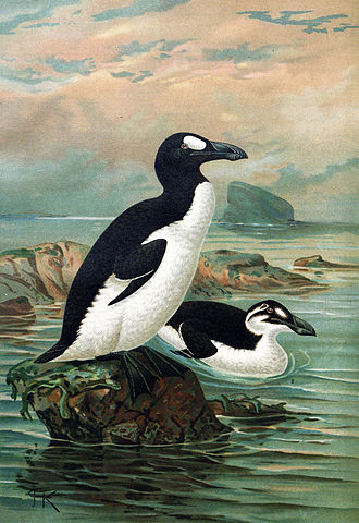 Great auks. John Gerrard Keulemans via Wikimedia Commons.