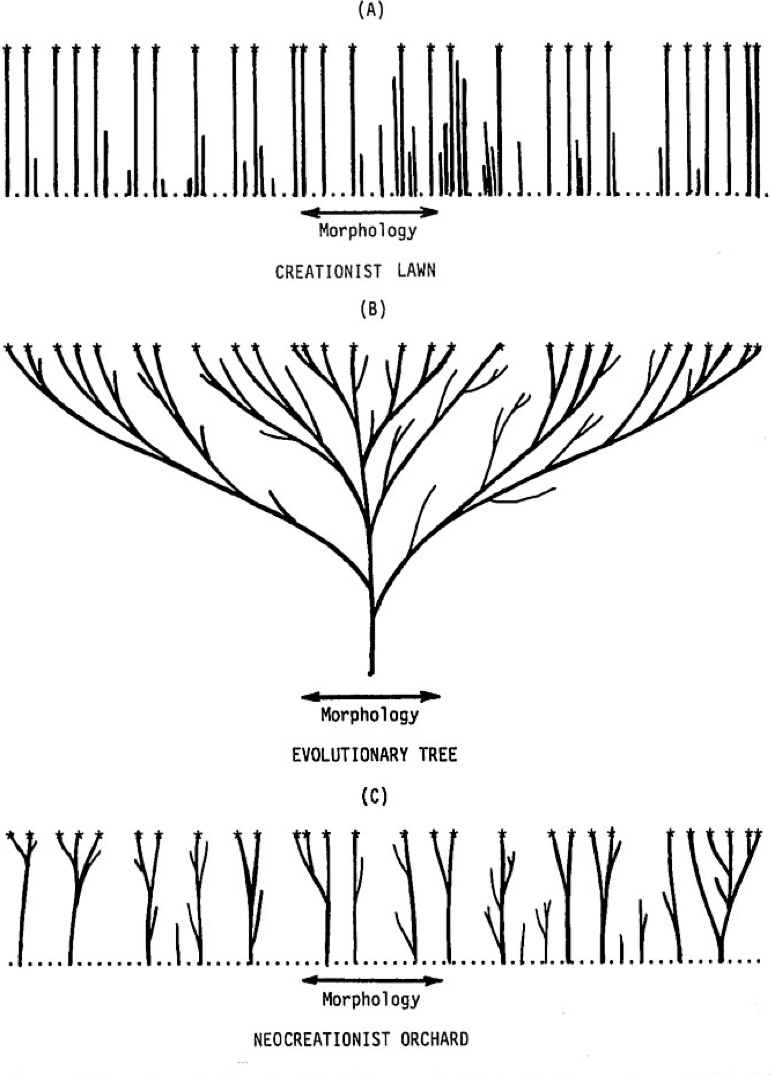 """From Kurt Wise (1990) """"Baraminology: A Young-Earth Creation Biosystematic Method,"""" showing a creationist """"lawn,"""" a single tree of life, and the """"neocreationist orchard"""""""