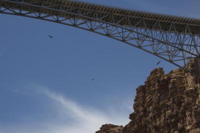 Condors soar around Navajo Bridges