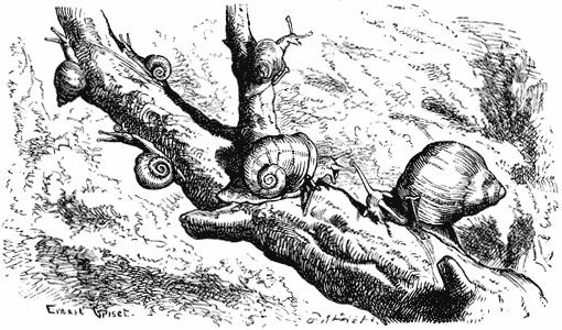 """""""Six Little Snails"""" by E. Griset"""