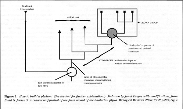 Figure 1. How to build a phylum.