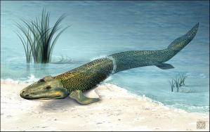 "Tiktaalik roseae: Its wrist configuration allowed it to ""do a pushup."" Image from WikiCommons."