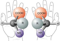 Left-Right Chirality:  Image from WikiCommons [http://commons.wikimedia.org/wiki/Image:Chirality_with_hands.jpg]