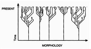 "The Neocreationist orchard: ""Figure:4 A polyphyletic (orchard) view: branching within major groups, but no connections between them."" EE, p. 10."