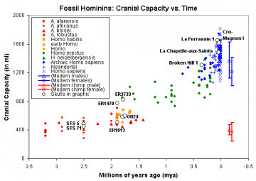 "Ages and cranial capacity data: C. De Miguel and M. Henneberg (2001). ""Variation in hominid brain size: How much is due to method?""  Homo 52(1), pp. 3-58.    Cranial capacity of modern humans: McHenry et al. (1994). ""Tempo and mode in human evolution."" Proceedings of the National Academy of Sciences, 91:6780-6.  Graphic by Nick Matzke, National Center for Science Education.  May be freely reproduced for nonprofit educational purposes."