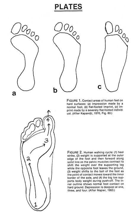 Figures 1-2
