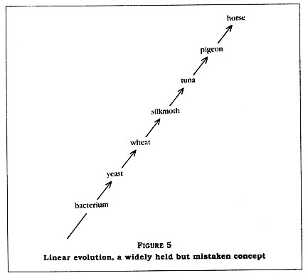 Figure 5: Linear evolution, a widely held but mistaken concept