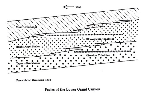 Facies of the Lower Grand Canyon: Thin, highly persistent layers of clay occur within Middle and Upper Ordovician limestones and shales along the miogeocline and adjacent platform. Although these beds are only a few centimeters thick, they can be traced for hundreds of kilometers from the shale into the limestone facies. Because they are independent of facies, they make excellent key beds for establishing correlations.