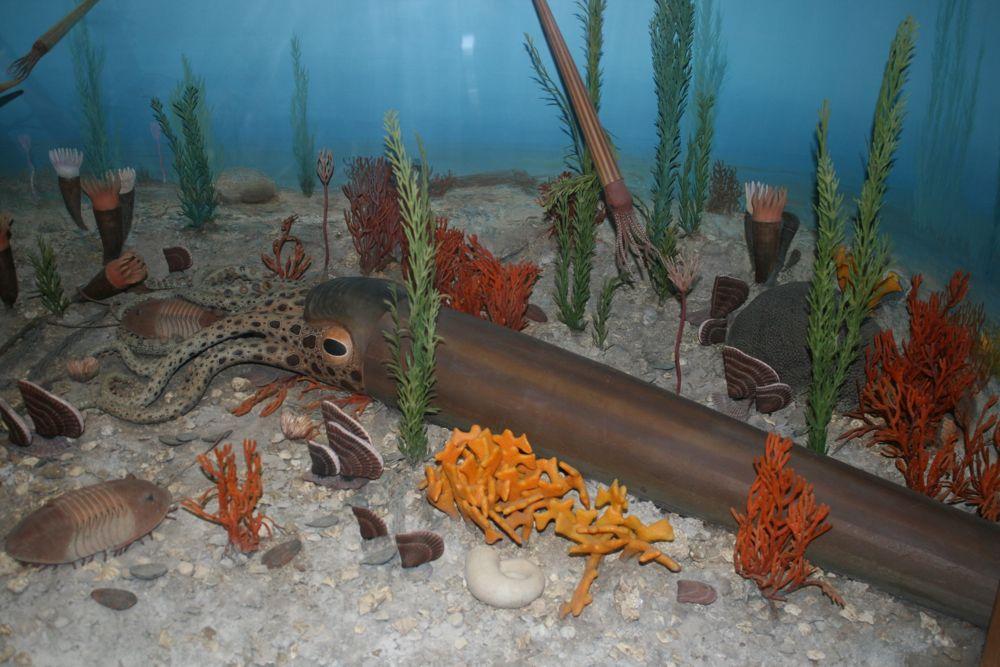 orthocone nautiloid, Smithsonian diorama