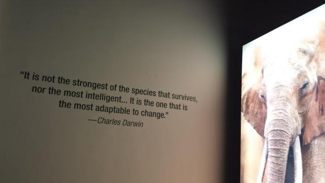 Megginson quotation at the Field Museum