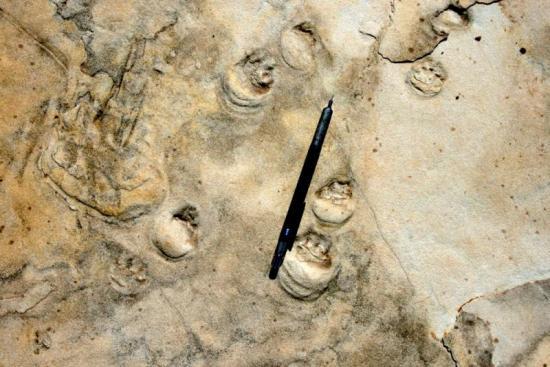 coconino footprints