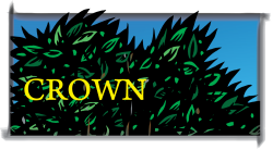 Crown Supporters