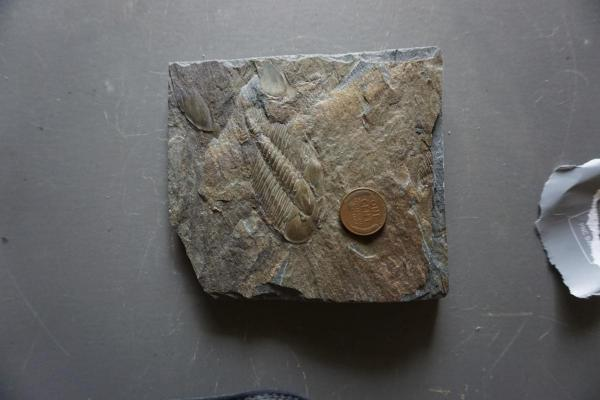 A fossil!